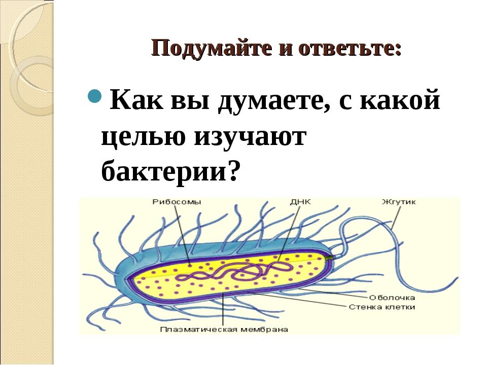Подумайте и ответьте: Как вы думаете, с какой целью изучают бактерии?