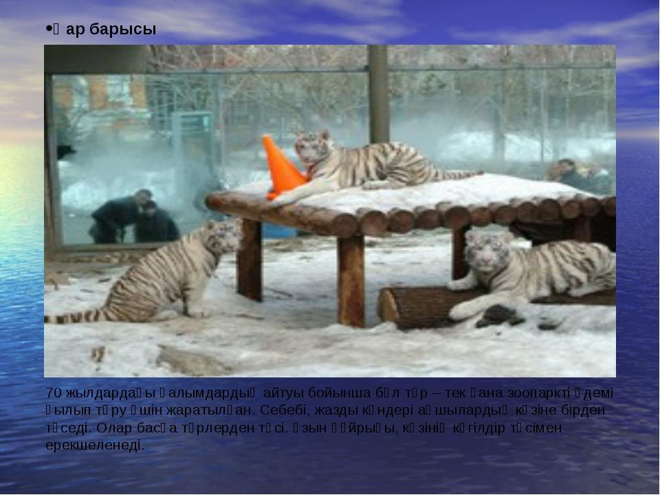 Қар барысы 70 жылдардағы ғалымдардың айтуы бойынша бұл түр – тек қана зоопарк...
