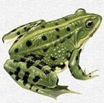 https://im0-tub-ru.yandex.net/i?id=95b0a1d1c60f5ffbd6e8a3d0c7d22242&n=21