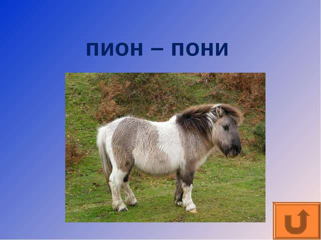 пион – пони