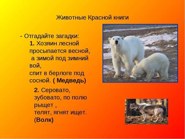 Животные Красной книги - Отгадайте загадки: 1. Хозяин лесной просыпается весн...