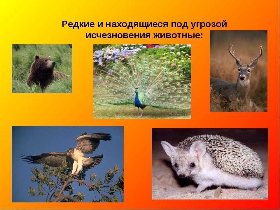 исчезающие виды животных все фото