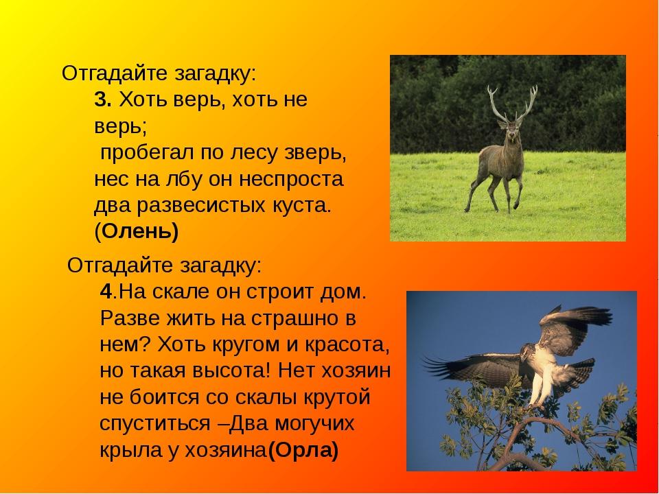 Отгадайте загадку: 3. Хоть верь, хоть не верь; пробегал по лесу зверь, нес на...