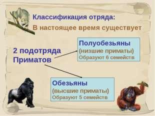 * Классификация отряда: В настоящее время существует Полуобезьяны (низшие при