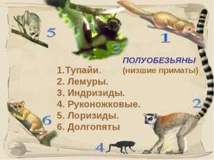 * ПОЛУОБЕЗЬЯНЫ (низшие приматы) 1.Тупайи. 2. Лемуры. 3. Индризиды. 4. Руконож