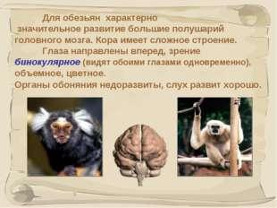 * Для обезьян характерно значительное развитие большие полушарий головного м