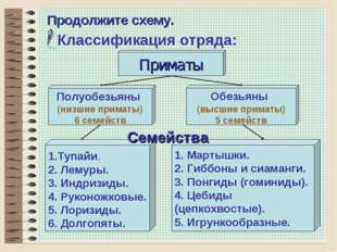 * Продолжите схему. Классификация отряда: Обезьяны (высшие приматы) 5 семейст