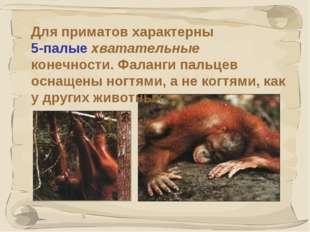 * Для приматов характерны 5-палые хватательные конечности. Фаланги пальцев ос