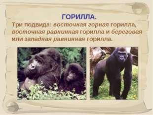 * ГОРИЛЛА. Три подвида: восточная горная горилла, восточная равнинная горилла