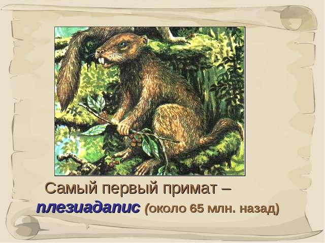 * Самый первый примат – плезиадапис (около 65 млн. назад)