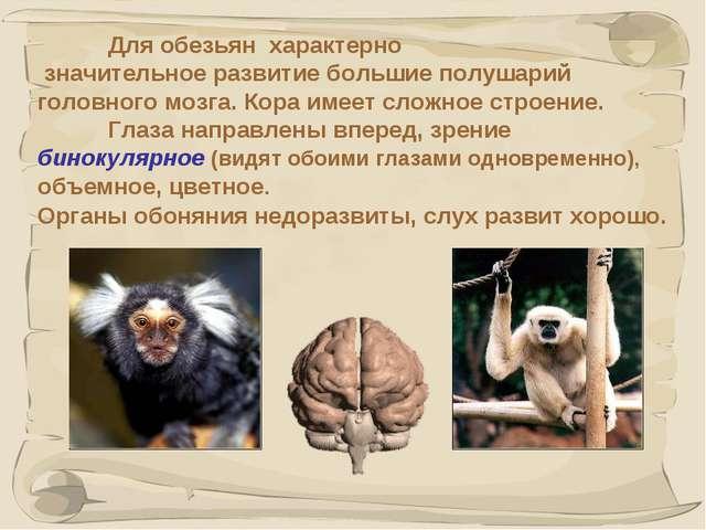 * Для обезьян характерно значительное развитие большие полушарий головного м...