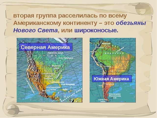 * вторая группа расселилась по всему Американскому континенту – это обезьяны...
