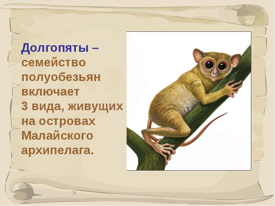 * Долгопяты – семейство полуобезьян включает 3 вида, живущих на островах Мала...