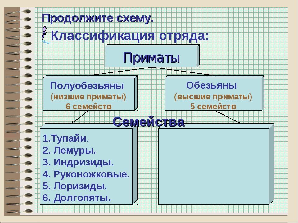 * Продолжите схему. Классификация отряда: Обезьяны (высшие приматы) 5 семейст...