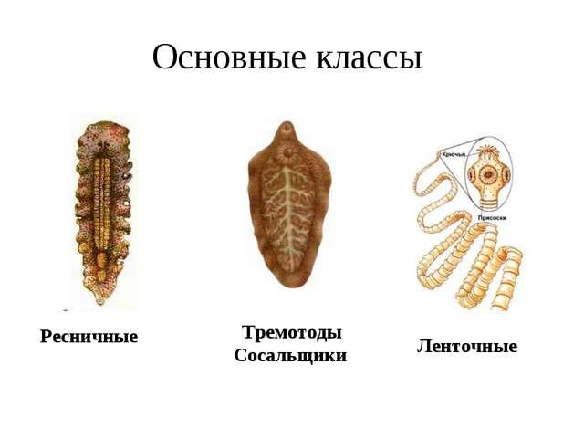 Основные классы Ресничные Тремотоды Сосальщики Ленточные