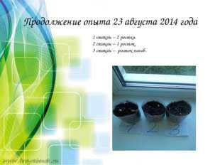 Продолжение опыта 23 августа 2014 года 1 стакан – 2 ростка. 2 стакан – 1 рост