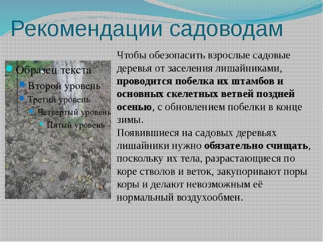 Рекомендации садоводам Чтобы обезопасить взрослые садовые деревья от заселени...