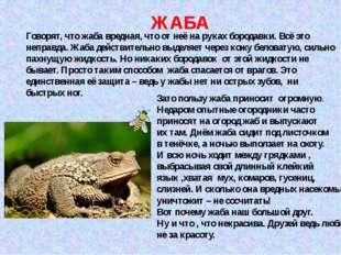 ЖАБА Говорят, что жаба вредная, что от неё на руках бородавки. Всё это неправ