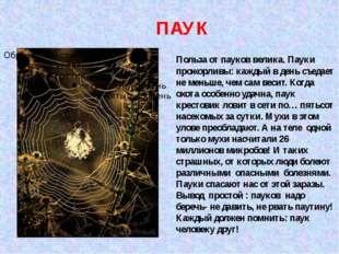 ПАУК Польза от пауков велика. Пауки прожорливы: каждый в день съедает не мень
