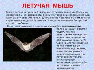 ЛЕТУЧАЯ МЫШЬ Много легенд и суеверий связано с летучими мышами. Очень уж нео