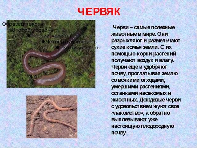 Черви – самые полезные животные в мире. Они разрыхляют и размельчают сухие к...