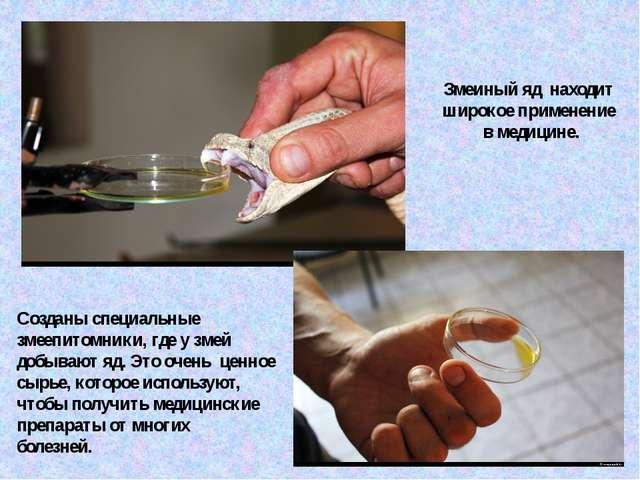 Змеиный яд находит широкое применение в медицине. Созданы специальные змеепит...