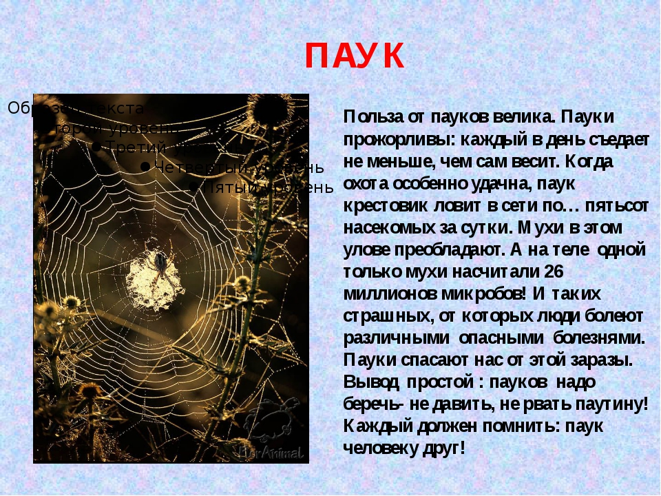 ПАУК Польза от пауков велика. Пауки прожорливы: каждый в день съедает не мень...