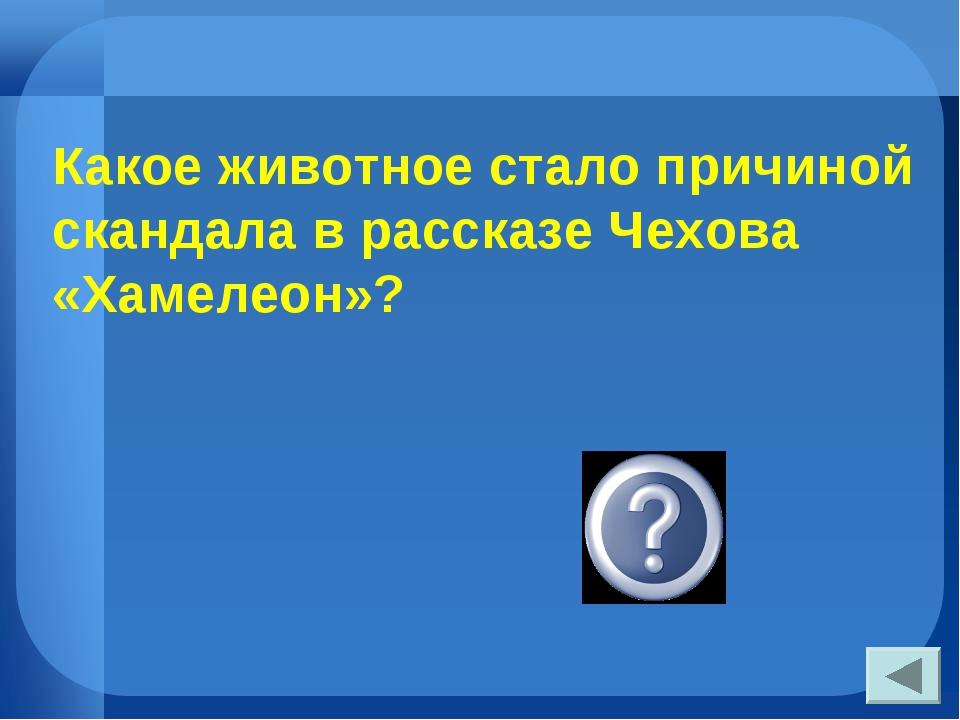 Какое животное стало причиной скандала в рассказе Чехова «Хамелеон»? собака