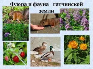 Флора и фауна гатчинской земли
