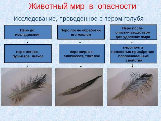 Исследование, проведенное с пером голубя. Перо до исследования Перо после обр...
