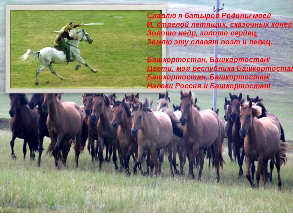 Славлю я батыров Родины моей И, стрелой летящих, сказочных коней. Золото недр...