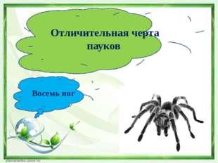 Отличительная черта пауков Восемь ног