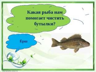 Какая рыба нам помогает чистить бутылки? Ёрш