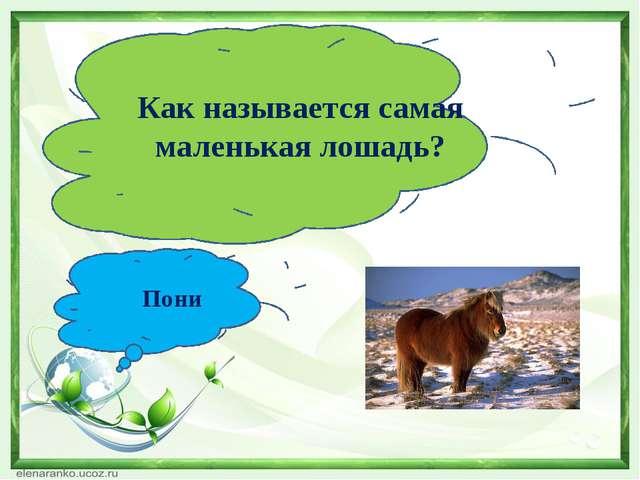 Как называется самая маленькая лошадь? Пони