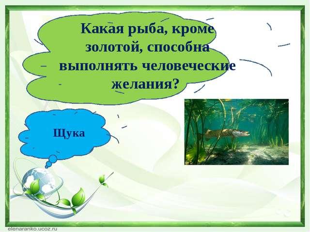 Какая рыба, кроме золотой, способна выполнять человеческие желания? Щука