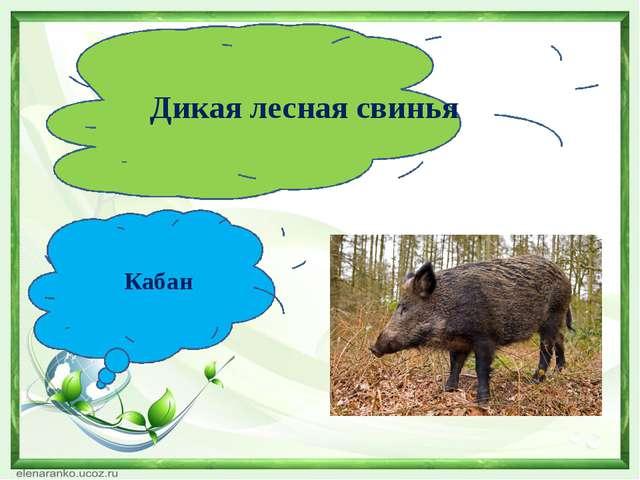 Дикая лесная свинья Кабан
