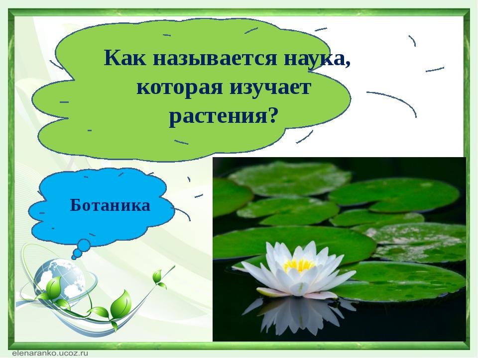 Цветы изучает наука