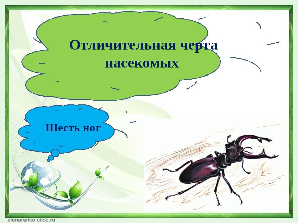 Отличительная черта насекомых Шесть ног