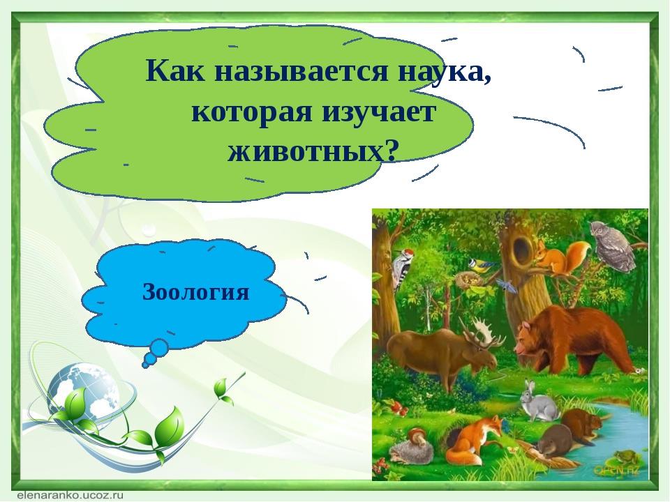 Как называется наука, которая изучает животных? Зоология