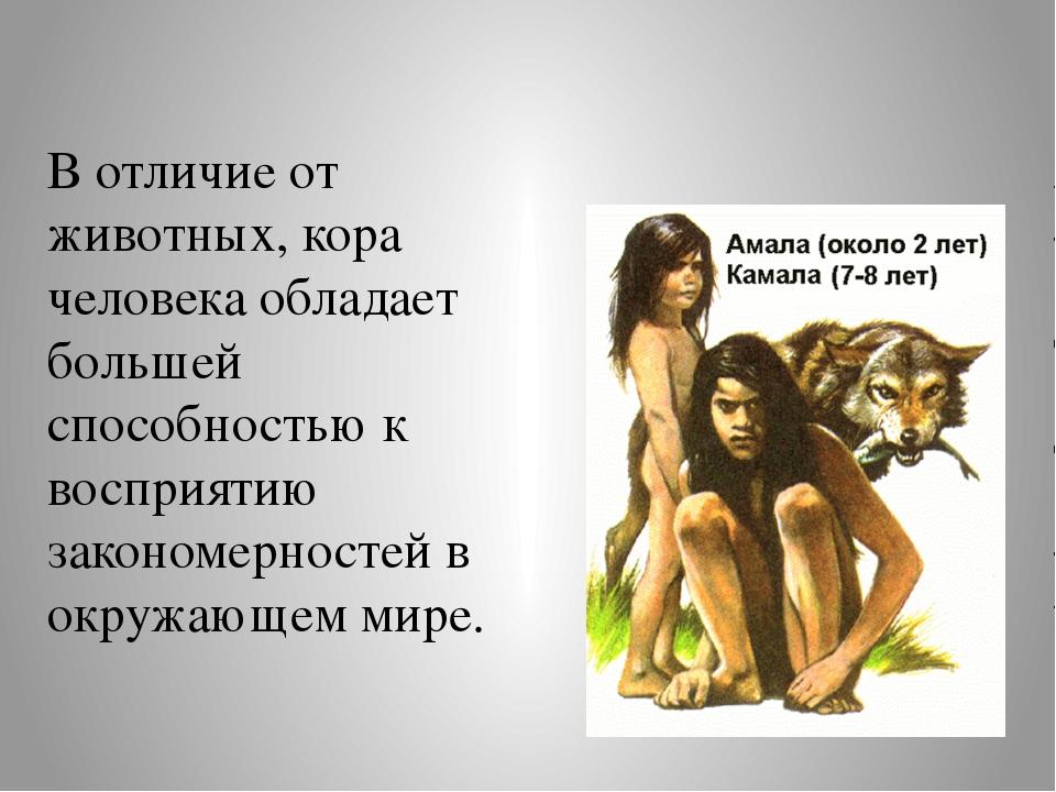 В отличие от животных, кора человека обладает большей способностью к восприят...