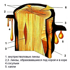 http://www.ambermuseum.ru/content/images/1150476316.jpg
