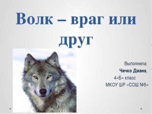 Волк – враг или друг Выполнила: Чичко Диана, 4«Б» класс МКОУ ШР «СОШ №5»