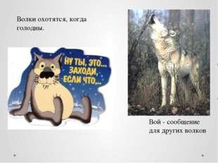 Волки охотятся, когда голодны. Вой - сообщение для других волков
