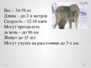 Вес – 34-56 кг Длина – до 2-х метров Скорость – 12-16 км/ч Могут преодолеть з