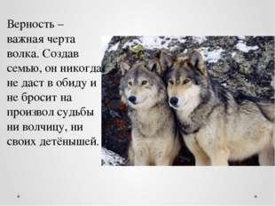 Верность – важная черта волка. Создав семью, он никогда не даст в обиду и не