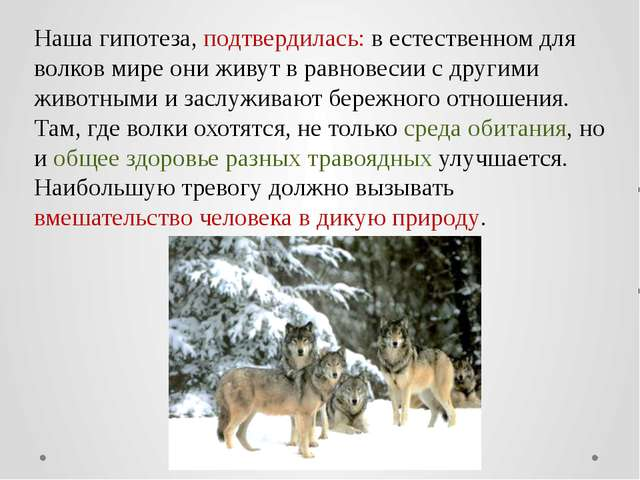 Наша гипотеза, подтвердилась: в естественном для волков мире они живут в равн...