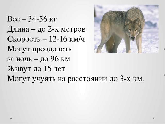 Вес – 34-56 кг Длина – до 2-х метров Скорость – 12-16 км/ч Могут преодолеть з...
