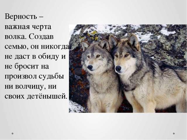 Верность – важная черта волка. Создав семью, он никогда не даст в обиду и не...