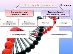 Взаимодействие генов Взаимодействие аллельных генов Взаимодействие неаллельны