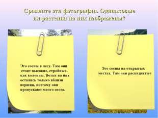 Сравните эти фотографии. Одинаковые ли растения на них изображены?